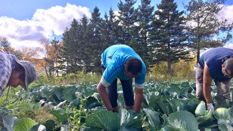 New immigration pilot will offer permanent residency to migrant farm-workers